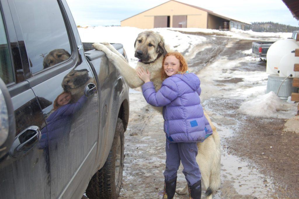 Girl with livetock guardian dog on the homestead
