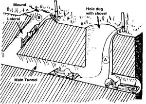 Diagram showing where to place traps in tunnel