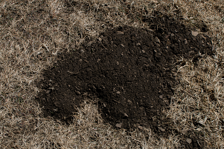 a pocket gopher dirt mound in the shape of a crescent
