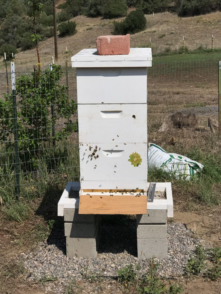 Langstroth beehive, one of the best hives for beginning beekeeping