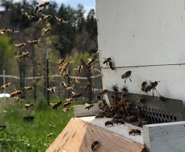 Bees Beginning beekeeping