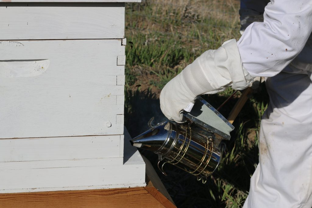 beekeeper using a bee smoker