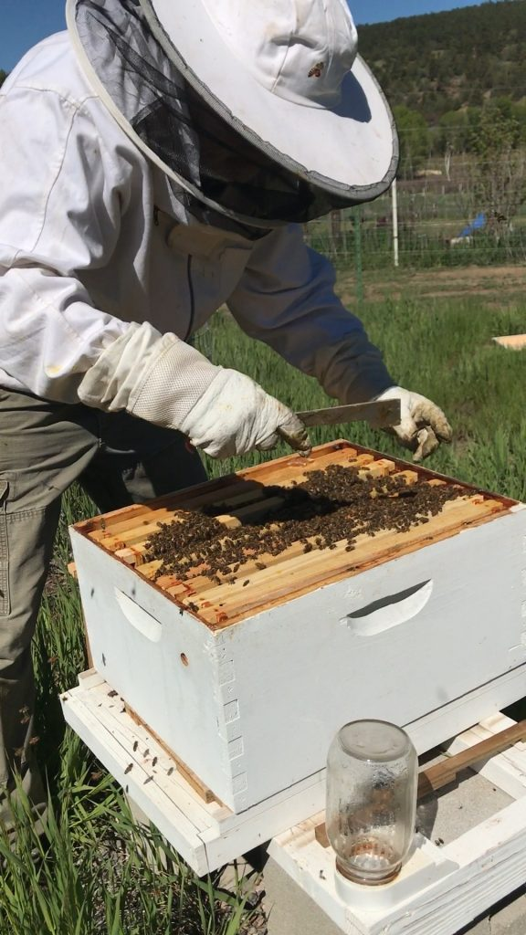 Beekeeper with a hive tool