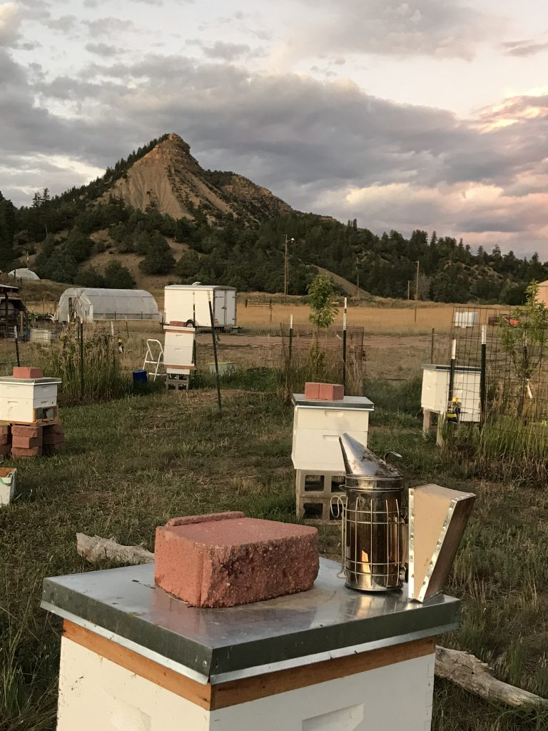 Langstroth hives in an orchard