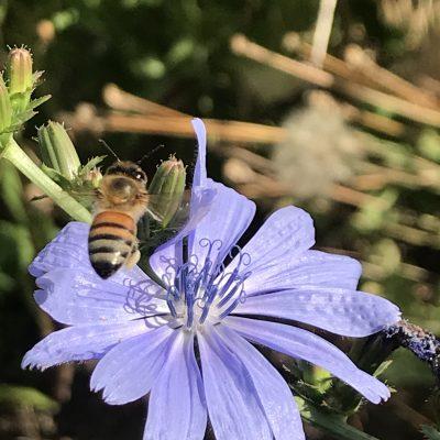 Beekeeping Bee on flower