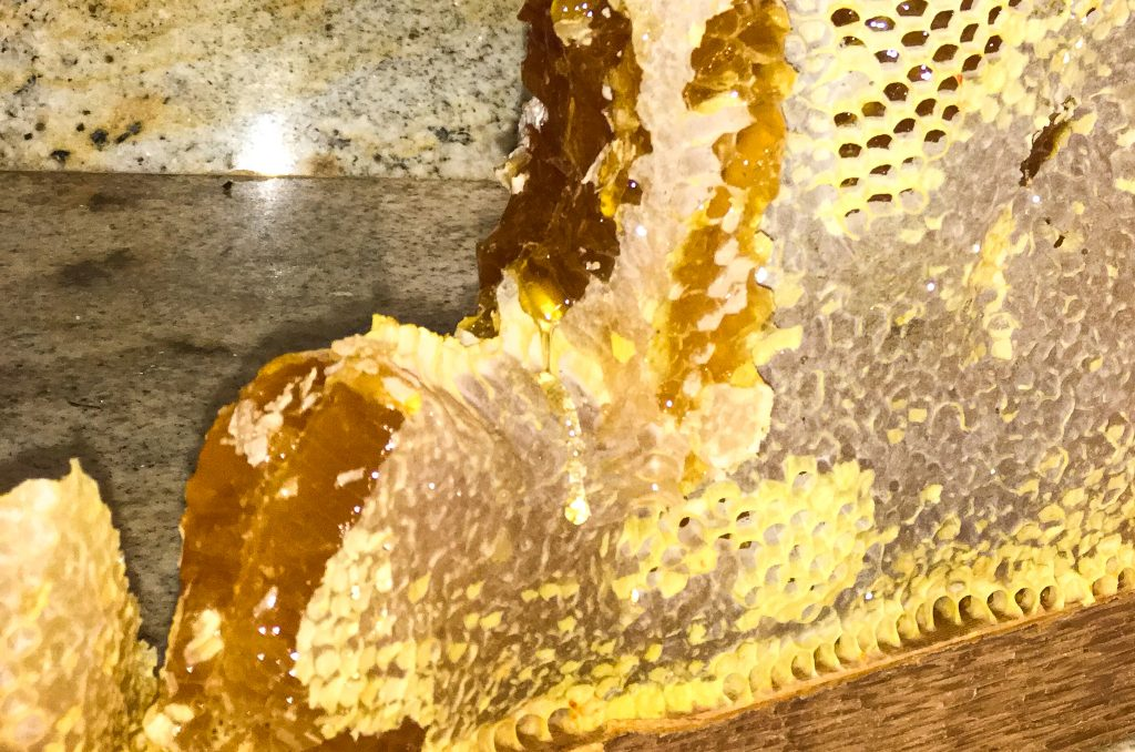 Honey Comb. Many people are beginning beekeeping to get delicious honey